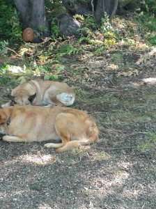 This is Rogue and Lolo on the beach at Fallen Leaf Lake.