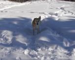 Talkeetna looking behind me while standing in Snow.