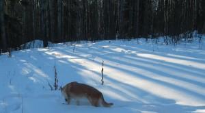 talki_in_snow