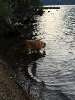 Here is Rogue drinking from the lake where is ankle deep.