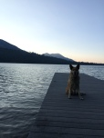Here is Lolo sitting on our family dock at Fallen Leaf Lake and she is looking east..