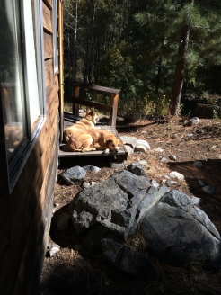 Here is Rogue and Lolo sunbathing on one of the decks at Fallen Leaf Lake.