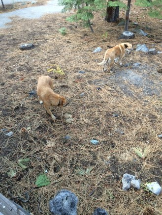 Here are Rouge and Lolo in a field near some cabins that we were staying at.