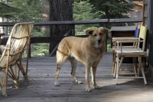 Rogue on a Porch.