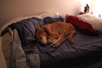 Here is Grayling sleeping on my bed before I could make it.