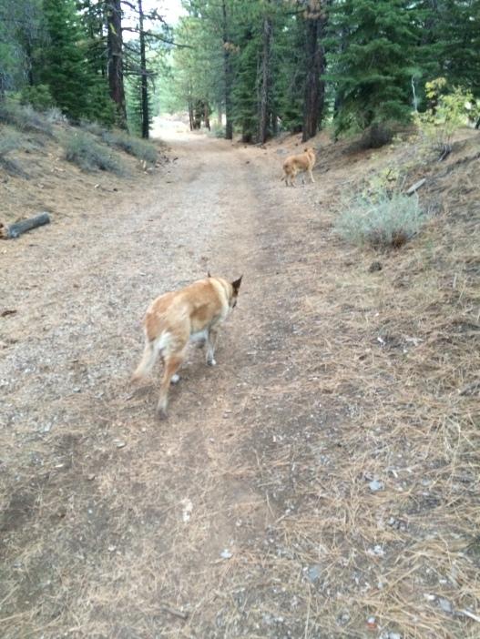 Here is Lolo walking along a dirt road.