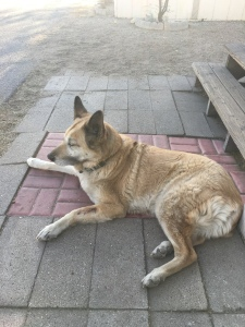 Here is Lolo sitting in the shade in front of the front steps.