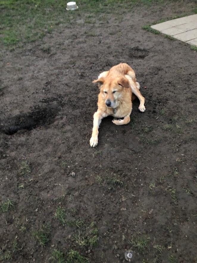 Rogue at a Dog Park