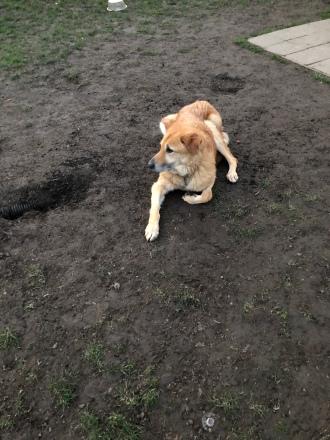 Rogue at a Dog Park 2